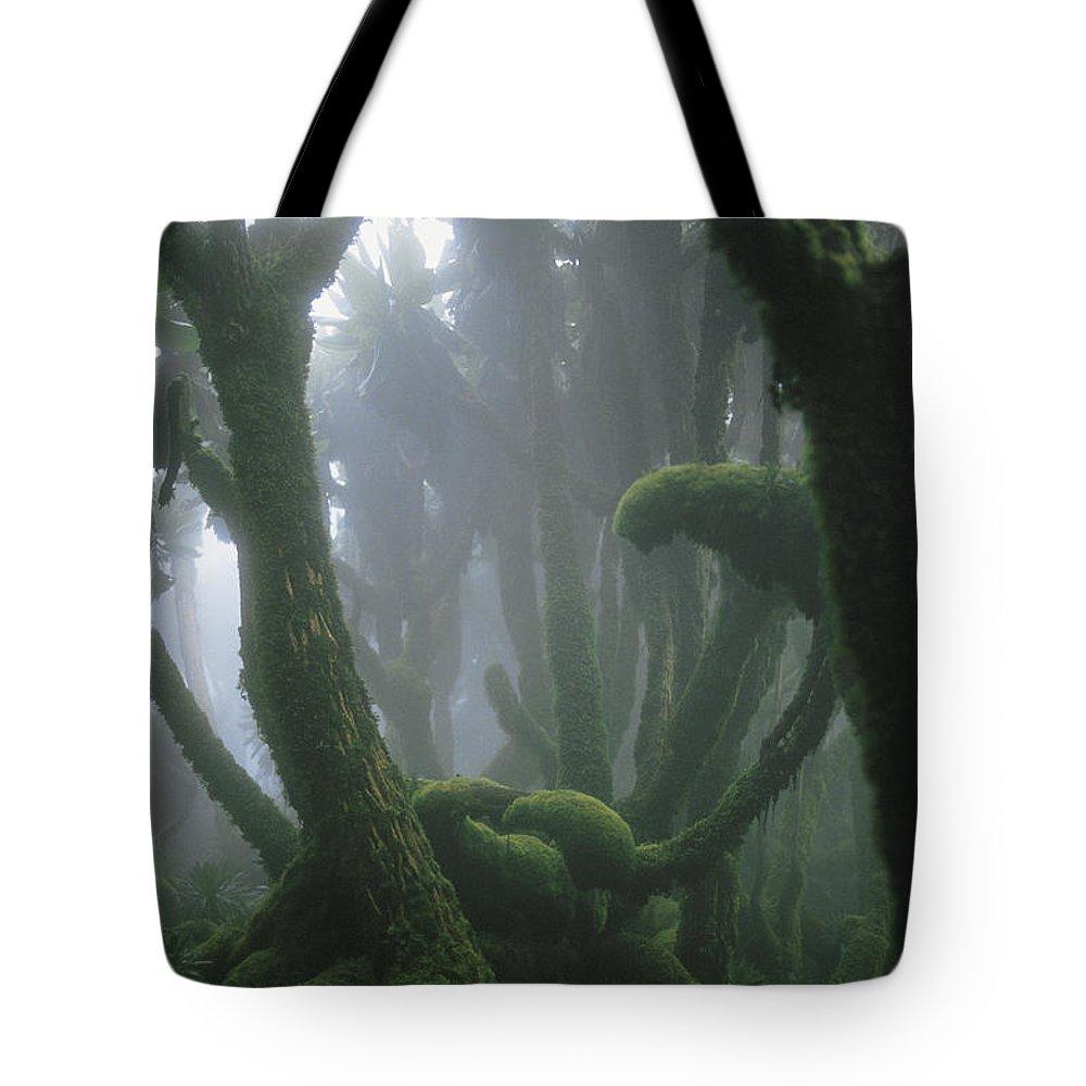 Africa Tote Bag featuring the photograph A Fog-enshrouded Rain Forest In Rwandas by Michael Nichols