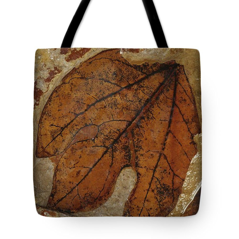 North America Tote Bag featuring the photograph A Fossilized Sassafras Leaf by Jonathan Blair