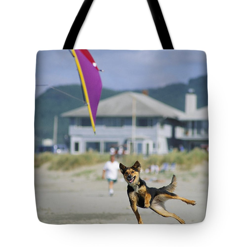 Lincoln City Tote Bag featuring the photograph A German Shepherd Leaps For A Kite by Phil Schermeister