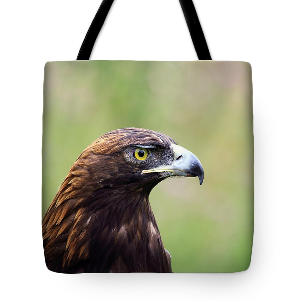 Golden Eagle Tote Bag featuring the photograph A Golden Moment by Shane Bechler