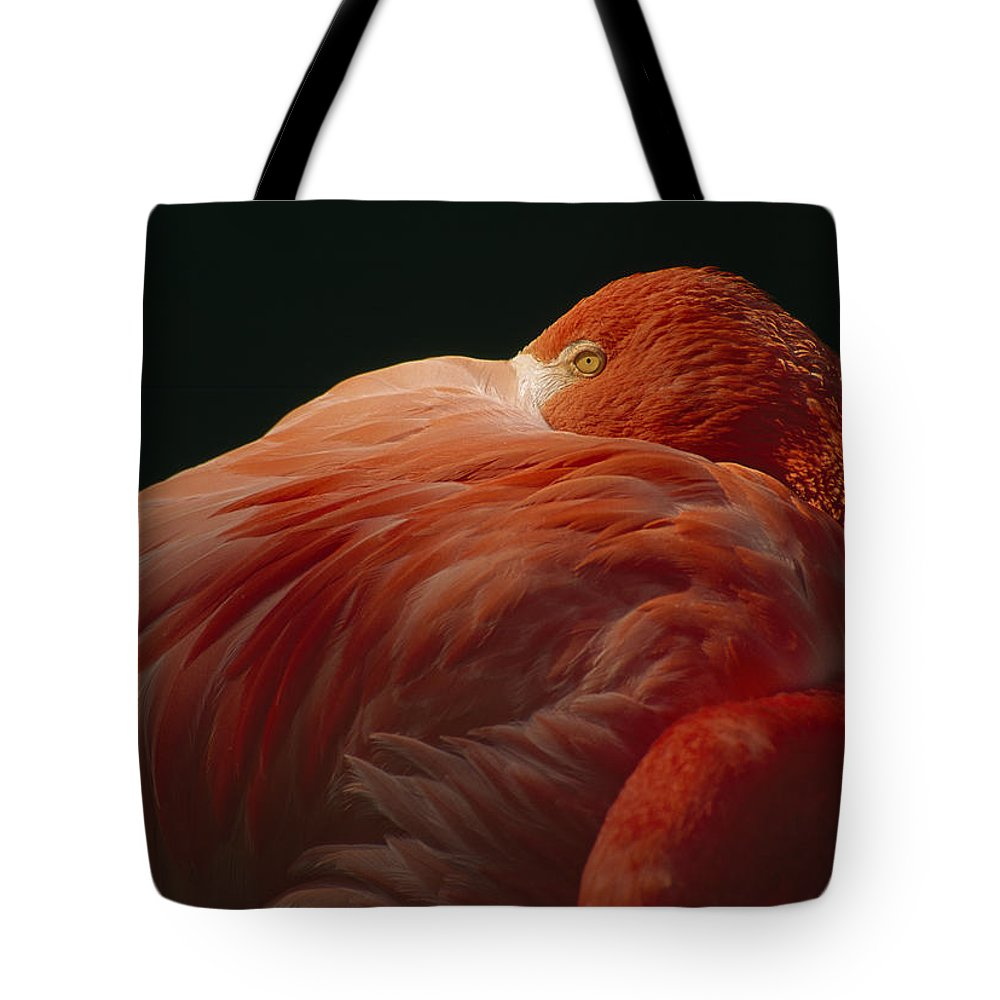 Outdoors Tote Bag featuring the photograph A Greater Flamingo With Its Head by Tim Laman