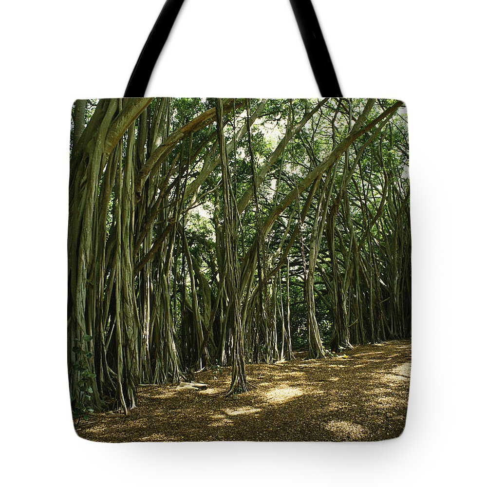 Plants Tote Bag featuring the photograph A Grove Of Banyan Trees Send Airborn by Paul Damien