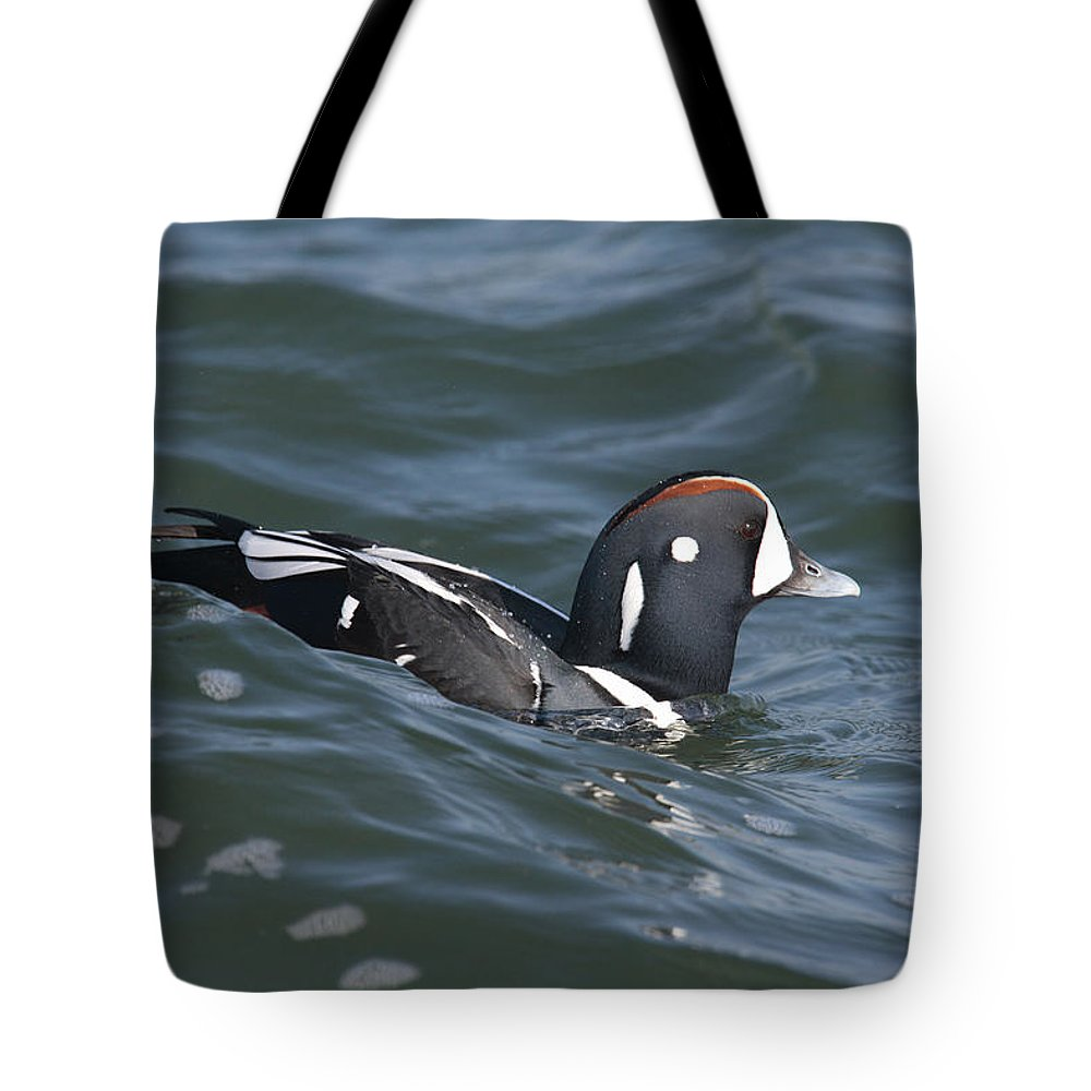 Barnagat Light Tote Bag featuring the photograph A Harlequin Duck Surfing by George Grall