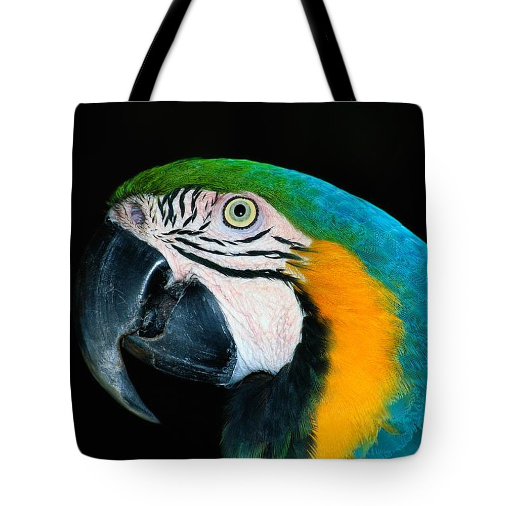 south America Tote Bag featuring the photograph A Head-only View Of A Captive Blue by Tim Laman