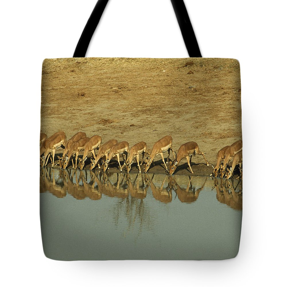 Impalas Tote Bag featuring the photograph A Herd Of Impala Drinking At A Watering by Jason Edwards