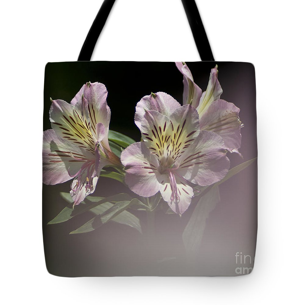 Nature Tote Bag featuring the photograph A Hint Of Rose by Heiko Koehrer-Wagner