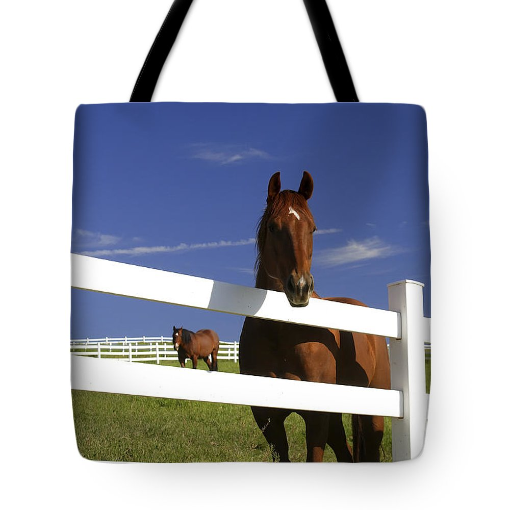 Color Image Tote Bag featuring the photograph A Horse Peers Over A Fence by Robbie George