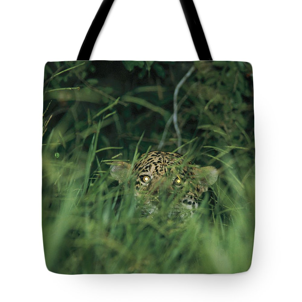 Outdoors Tote Bag featuring the photograph A Jaguar Peeks Out From The Foliage by Steve Winter