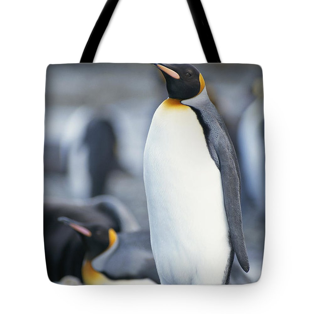 Antarctica Tote Bag featuring the photograph A King Penguin Stands On Pebbled Ground by Tom Murphy