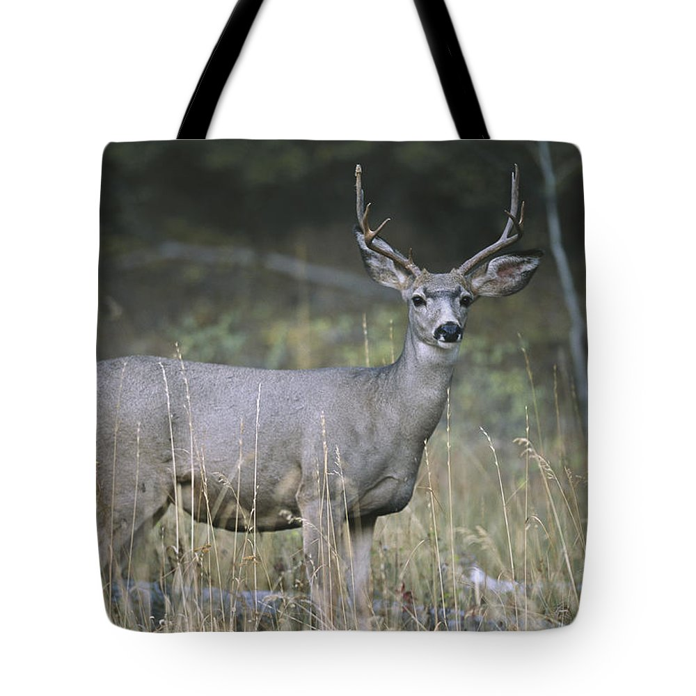 Anatomy Tote Bag featuring the photograph A Large Antlered White-tailed Deer by Melissa Farlow