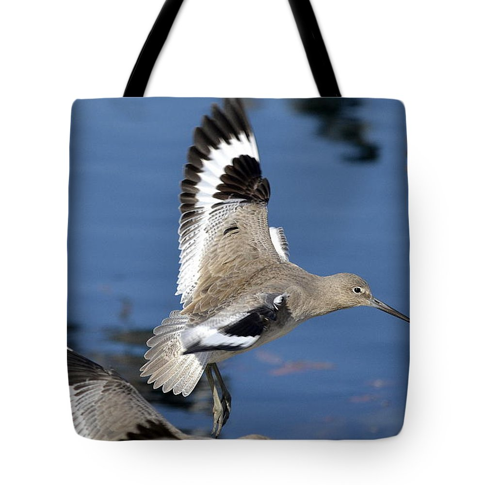 Willets Tote Bag featuring the photograph A Little Flurry by Fraida Gutovich