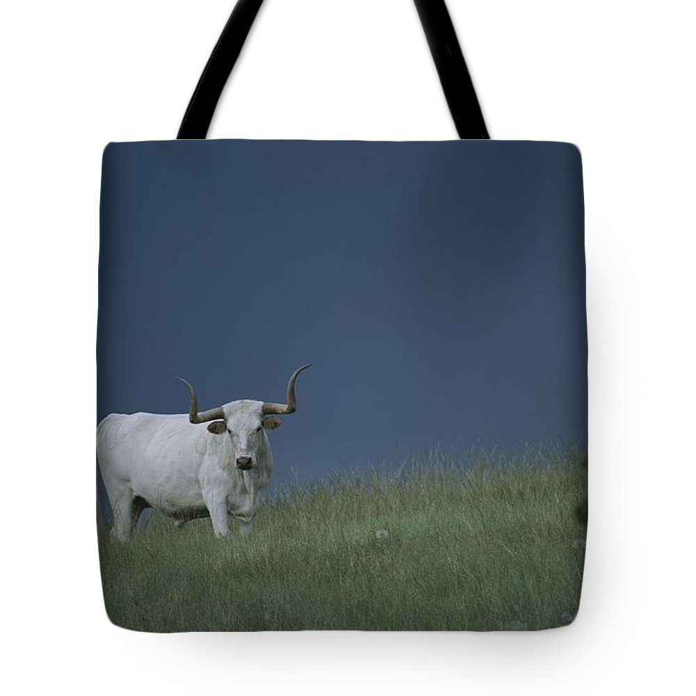 North America Tote Bag featuring the photograph A Longhorn Steer, One Member Of A Small by Michael Melford