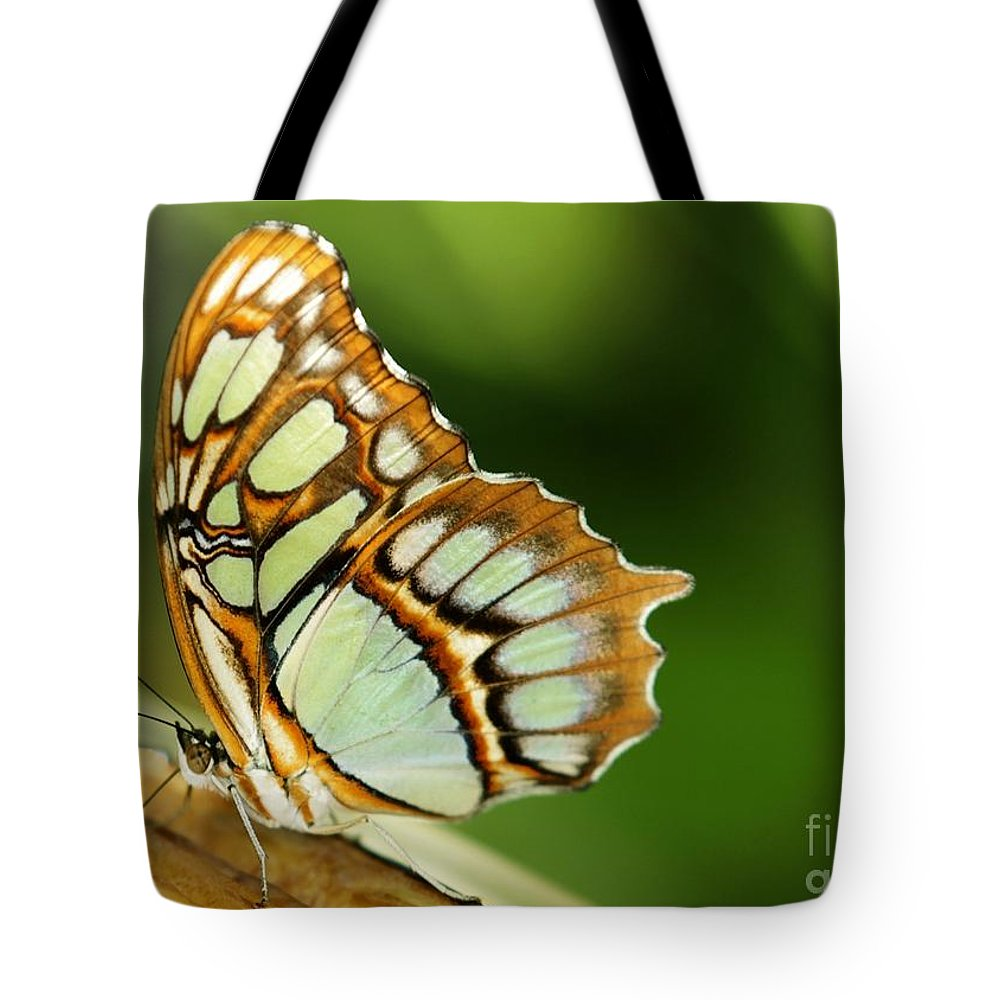 Butterfly Tote Bag featuring the photograph A Malachite Butterfly by Sabrina L Ryan