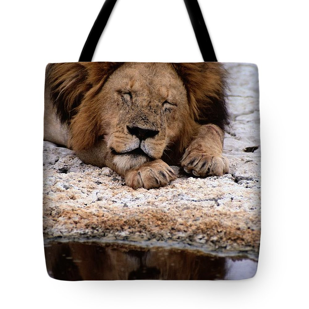 africa Tote Bag featuring the photograph A Male Lion Panthera Leo Sleeps by Tim Laman