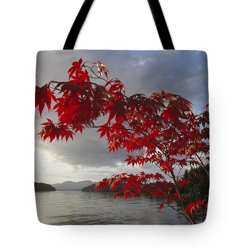 North America Tote Bag featuring the photograph A Maple Tree In Fall Foliage Frames by Richard Nowitz