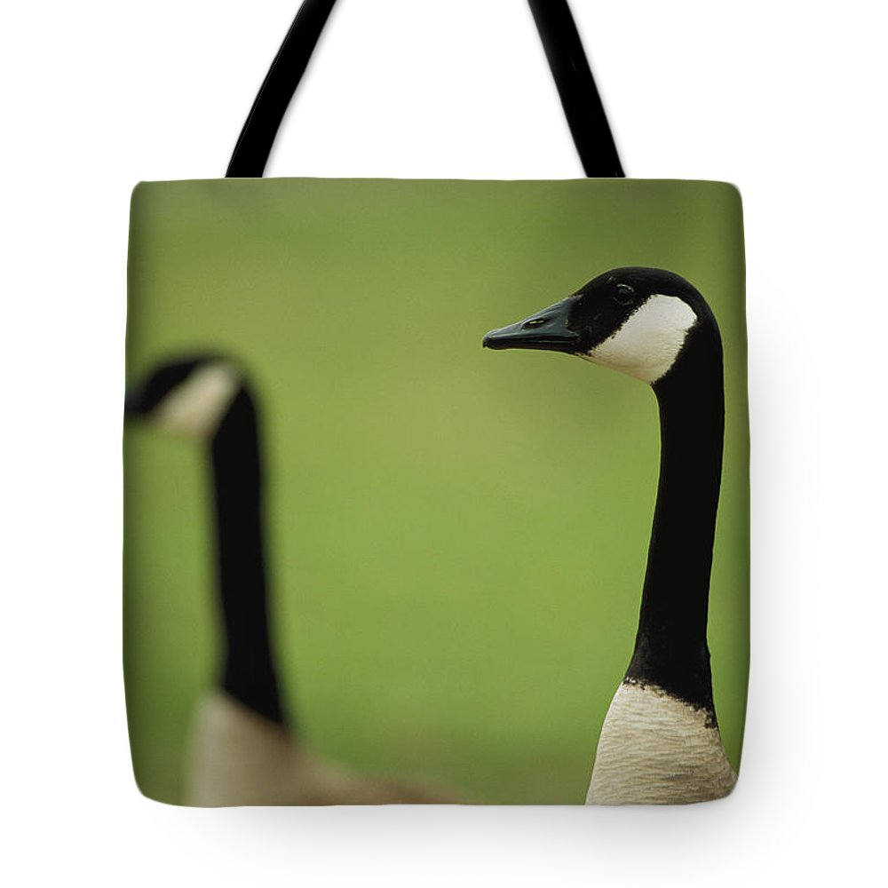 Animals Tote Bag featuring the photograph A Pair Of Canada Geese In Profile by Joel Sartore