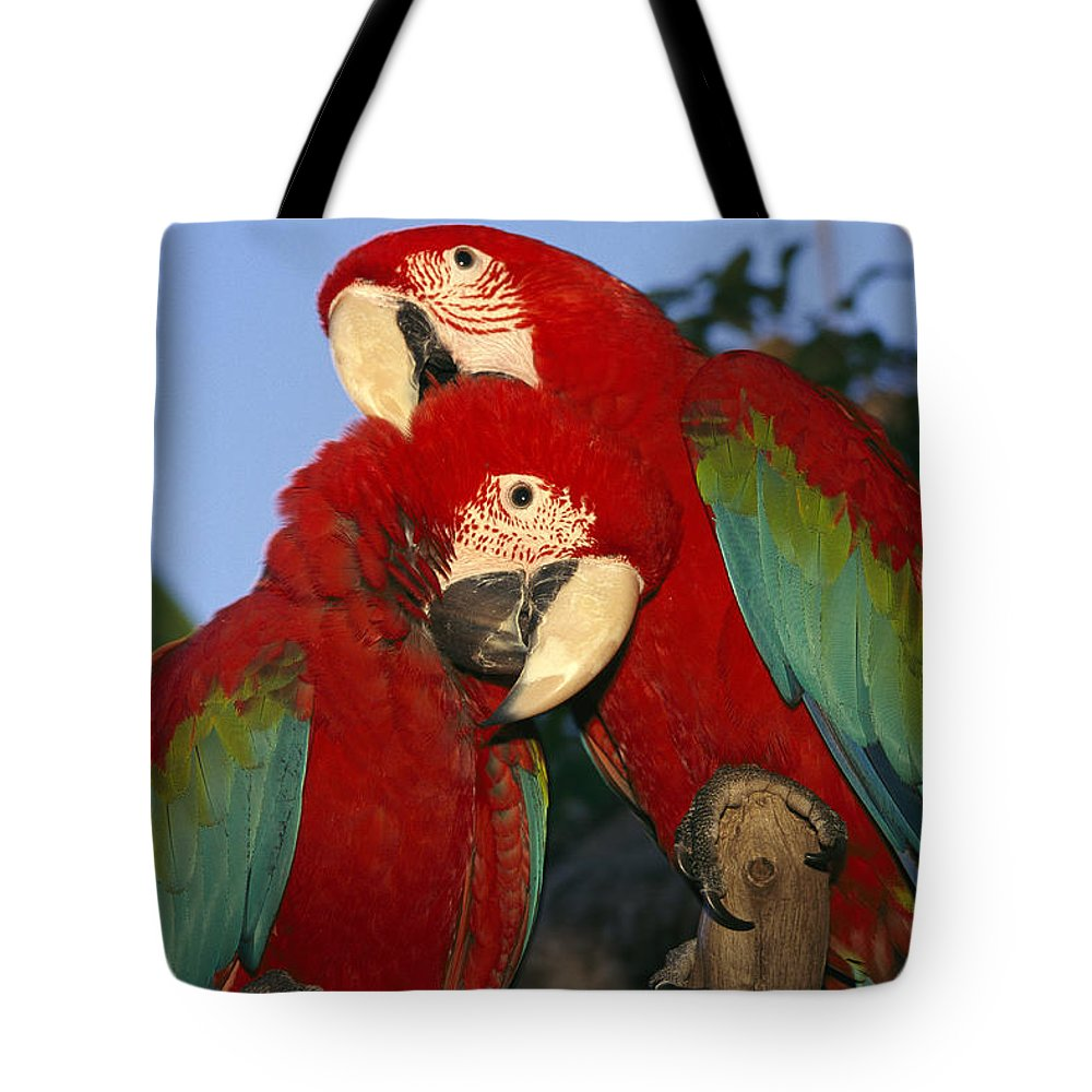 North America Tote Bag featuring the photograph A Pair Of Captive Red-and-green Macaws by Richard Nowitz