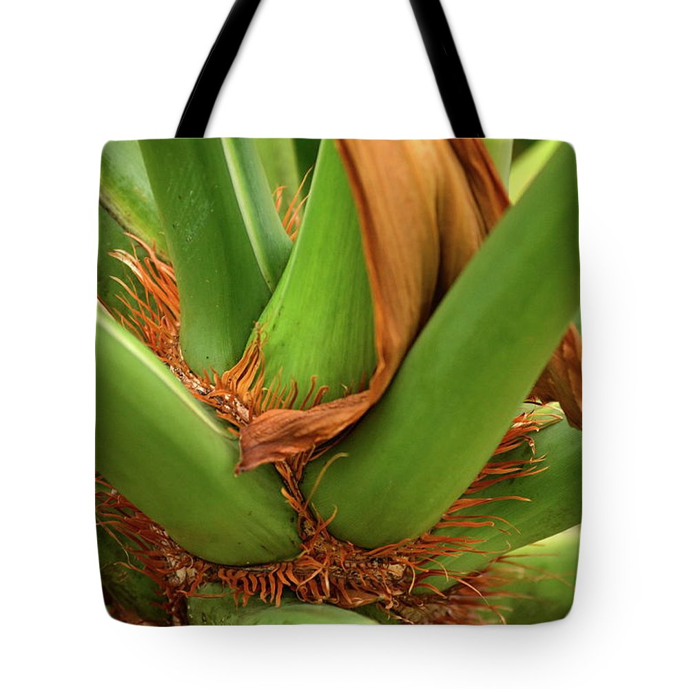 Palm Tote Bag featuring the photograph A Palmetto's Elbows by JD Grimes