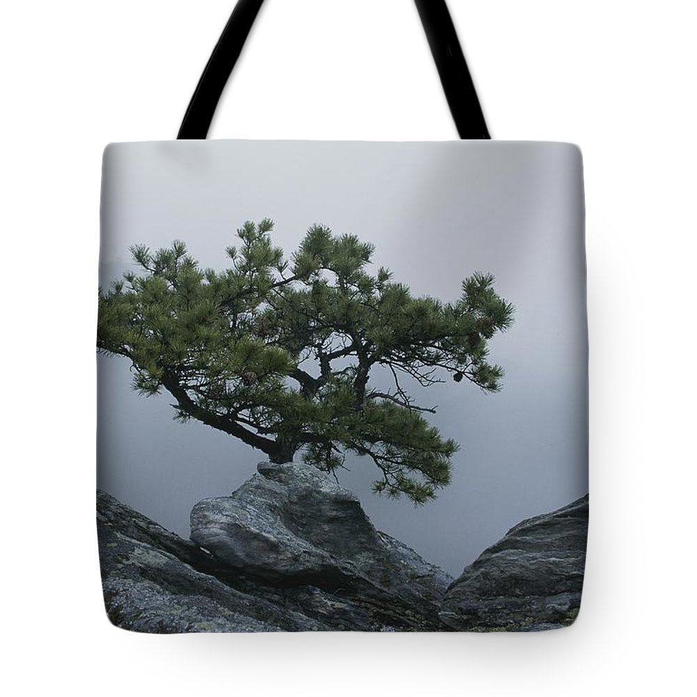 North America Tote Bag featuring the photograph A Pine Tree Clings To A Rocky Ridge by George F. Mobley