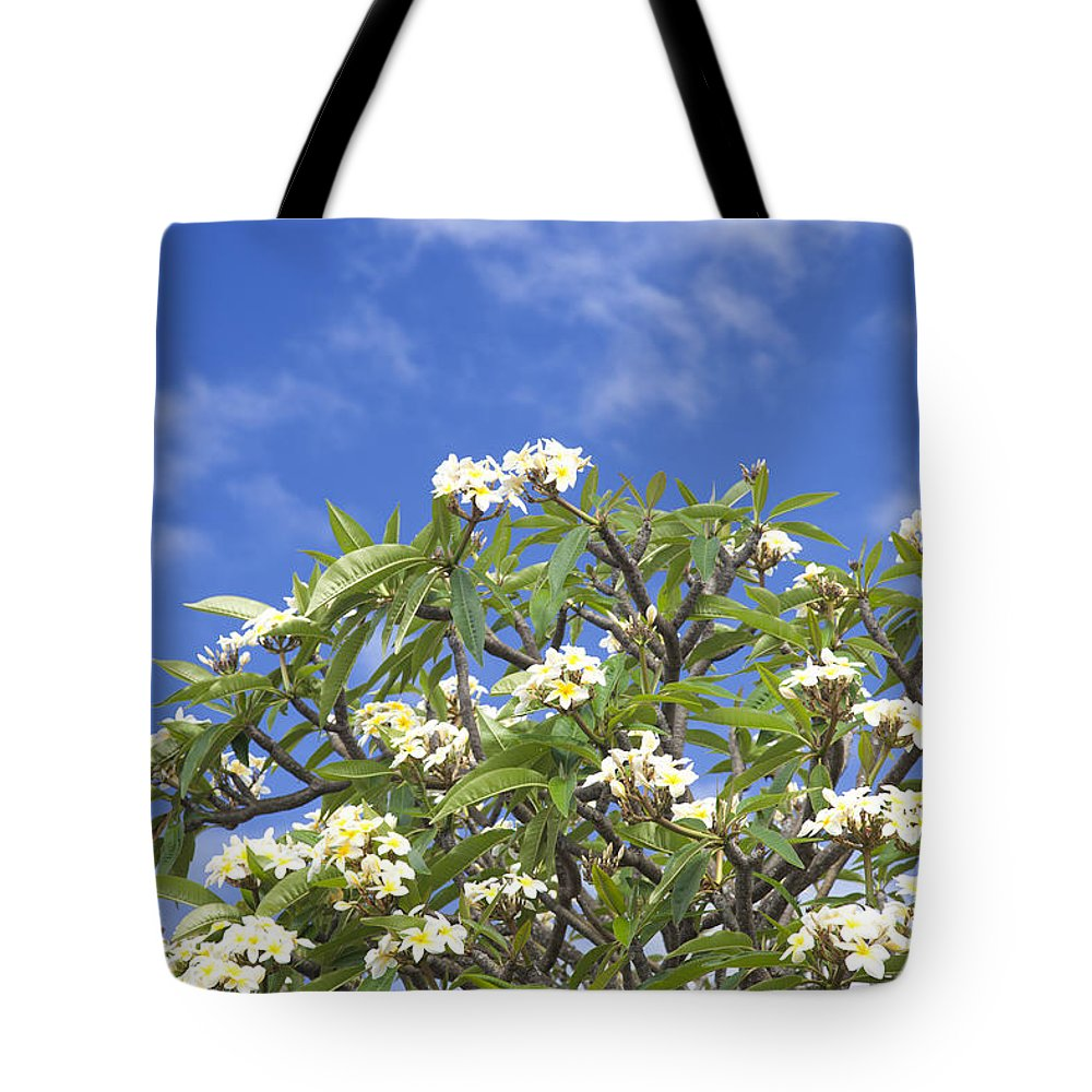 Kailua Tote Bag featuring the photograph A Plumeria Caracasana Tree In Full by Taylor S. Kennedy