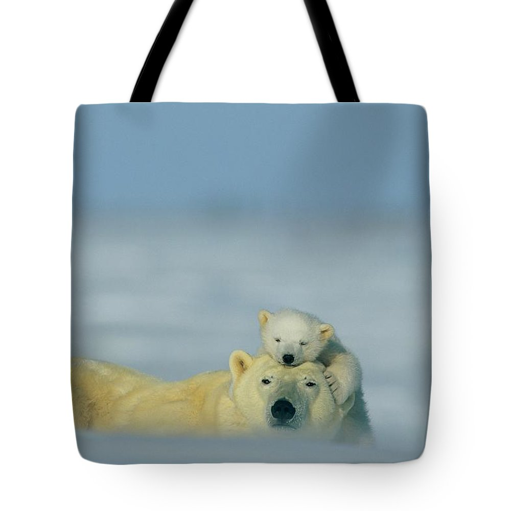 North America Tote Bag featuring the photograph A Polar Bear Cub Finds A Peaceful by Norbert Rosing