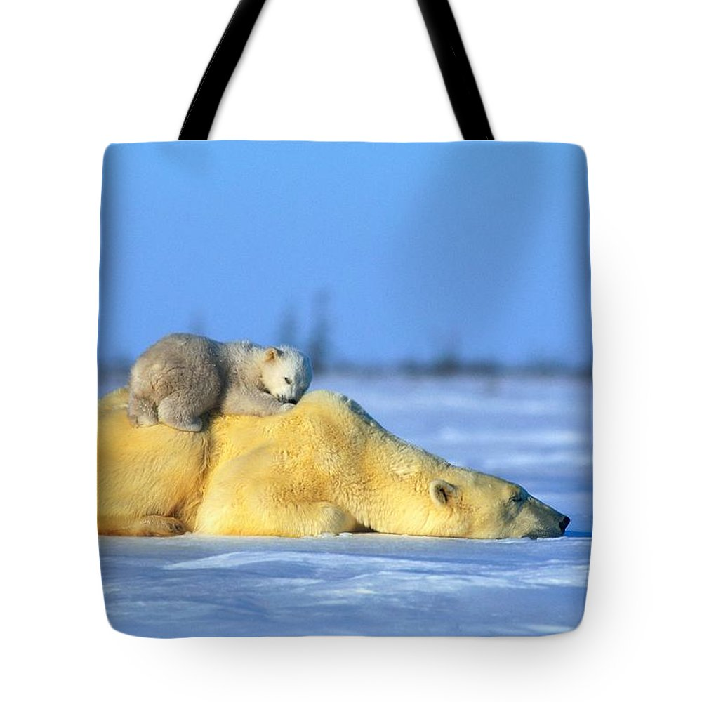 Color Image Tote Bag featuring the photograph A Polar Bear, Ursus Maritimus by Norbert Rosing
