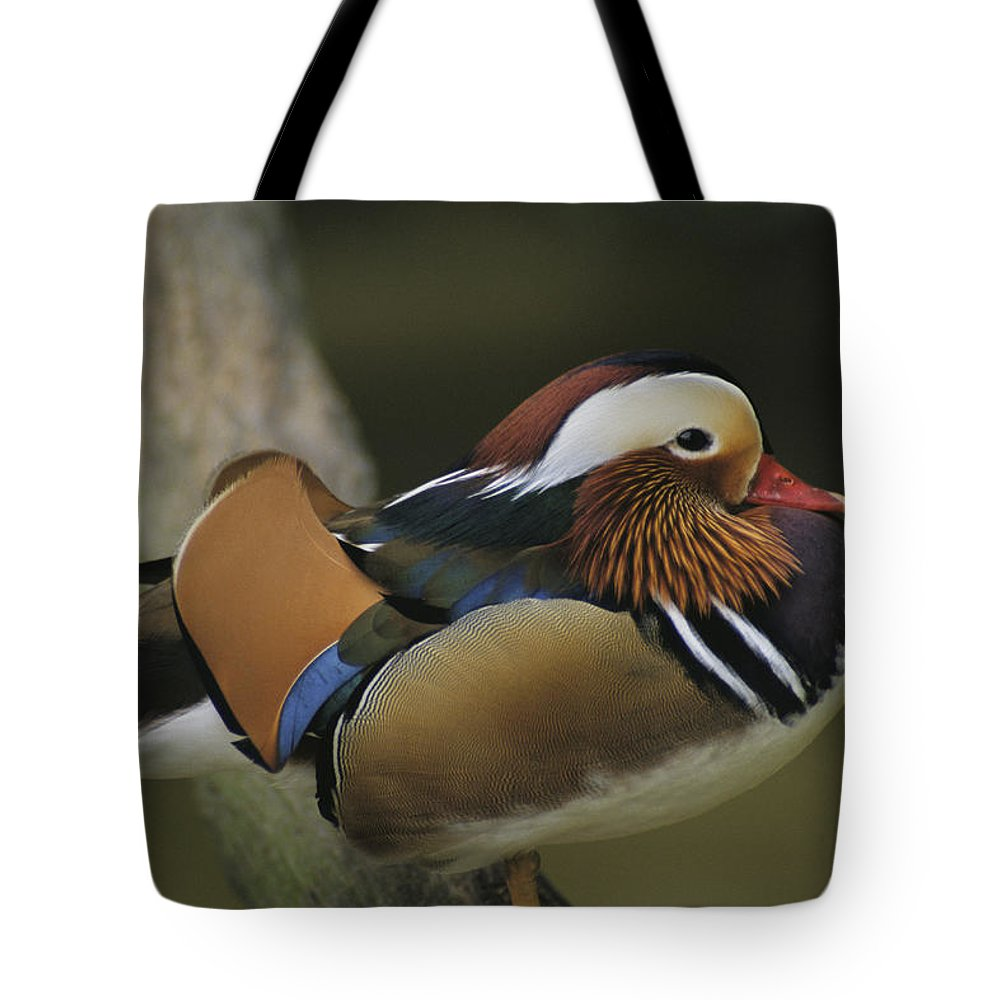 Asia Tote Bag featuring the photograph A Portrait Of A Mandarin Duck by Tim Laman