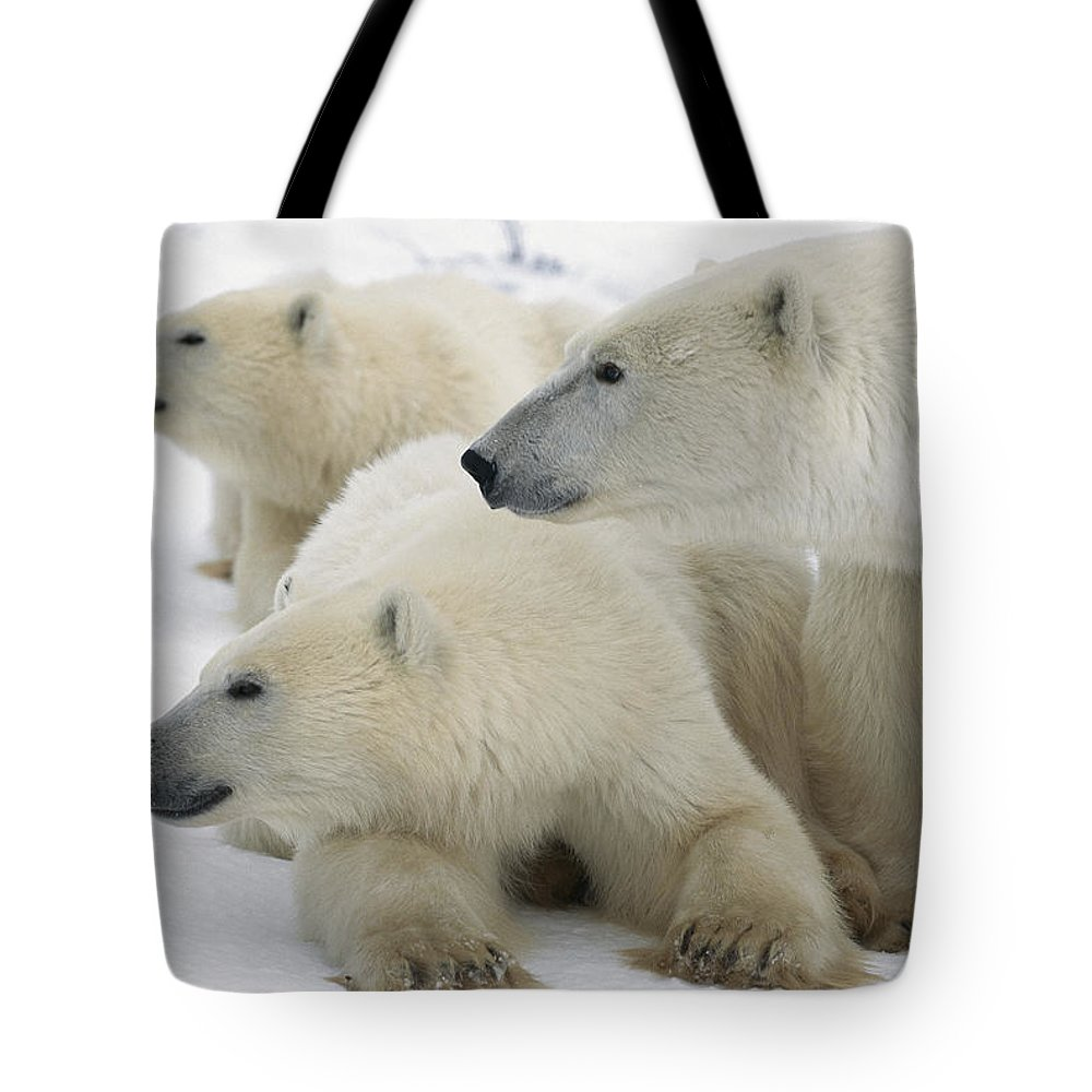 Color Image Tote Bag featuring the photograph A Portrait Of A Polar Bear Mother by Norbert Rosing