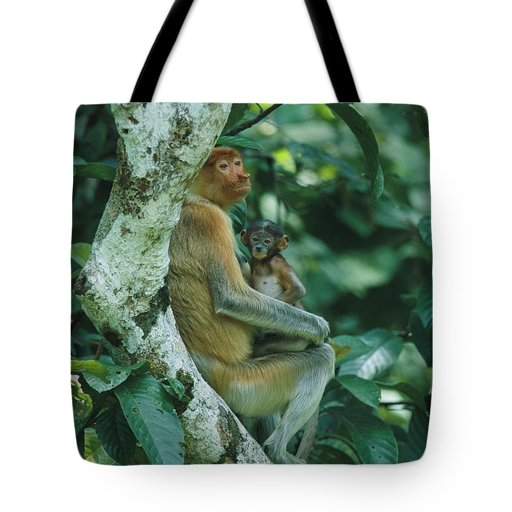 Outdoors Tote Bag featuring the photograph A Proboscis Monkey by Tim Laman