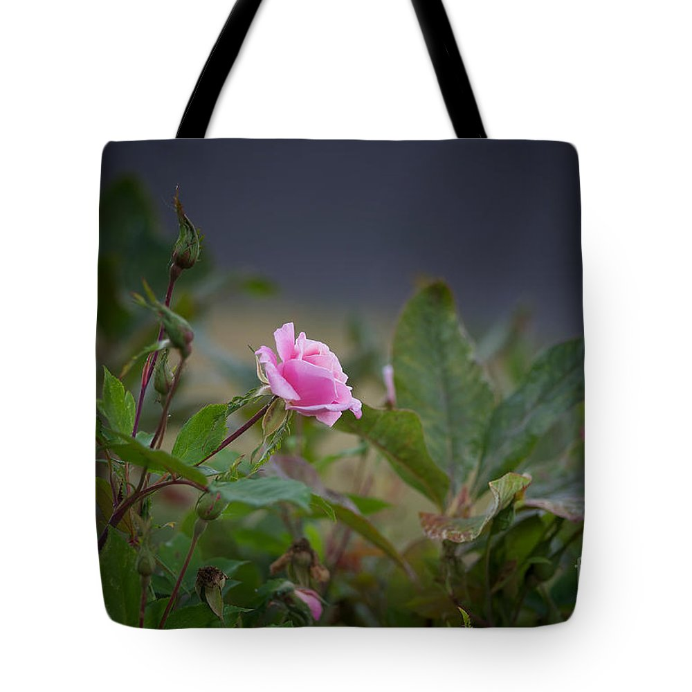 Rose Tote Bag featuring the photograph A Rose Is A Rose by James E Weaver