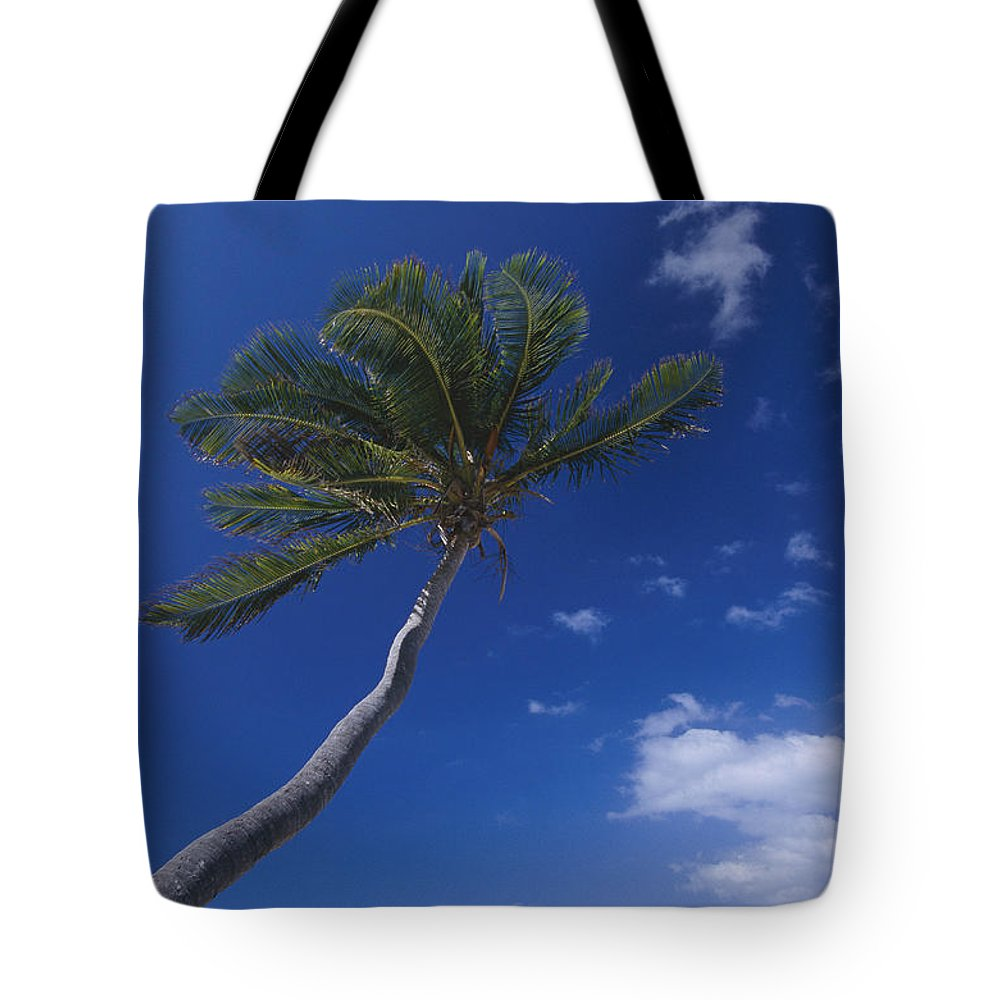 Peter Island Tote Bag featuring the photograph A Scenic View Of A Palm Tree by Todd Gipstein