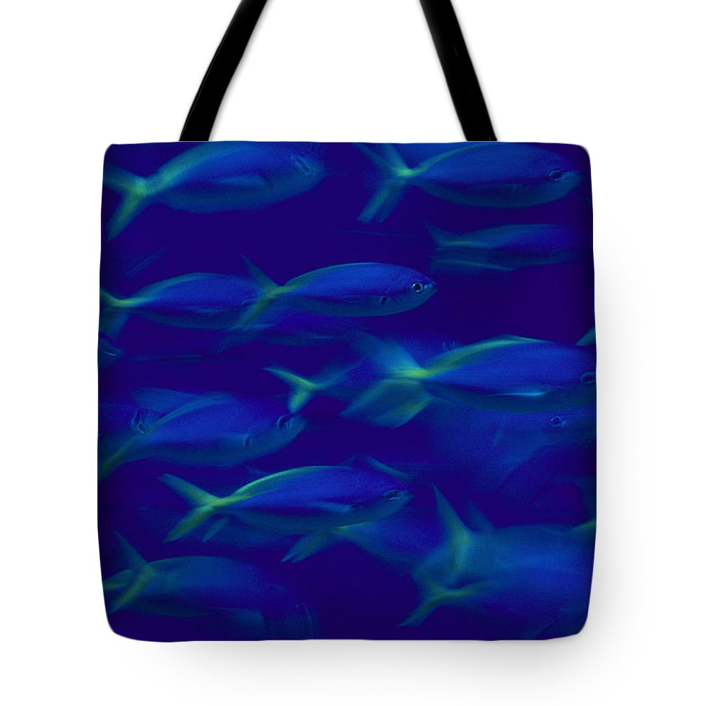 Color Image Tote Bag featuring the photograph A School Of Fusilier Fish, Caesio Teres by Bill Curtsinger