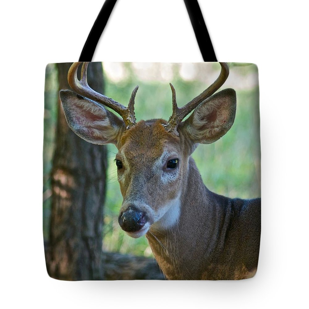 Animal Tote Bag featuring the photograph A Seven Point Profile 9752 by Michael Peychich