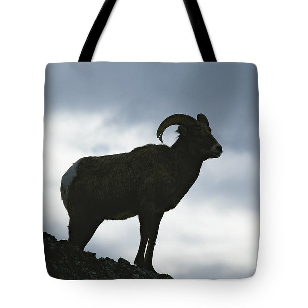 North America Tote Bag featuring the photograph A Silhouetted Bighorn Sheep Standing by Tom Murphy