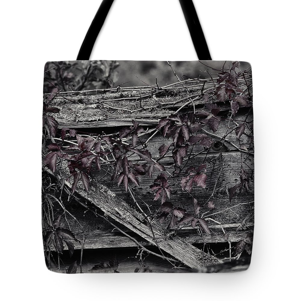 Cat Tote Bag featuring the photograph A Soft Entanglement by Susan Capuano