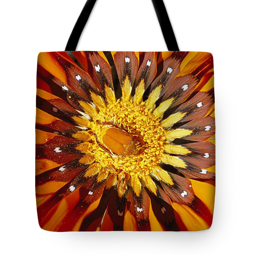 Plants Tote Bag featuring the photograph A South African Monkey Beetle Burrows by Jonathan Blair