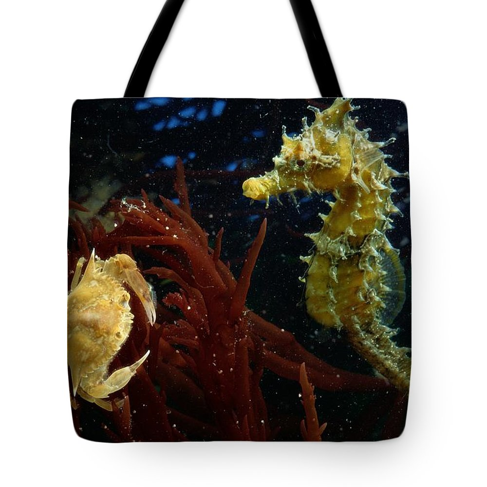 Color Image Tote Bag featuring the photograph A Spotted Young Blue Crab, Callinectes by George Grall
