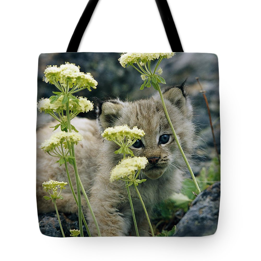 North America Tote Bag featuring the photograph A Tiny Lynx Cub Felis Lynx Peeks by Norbert Rosing