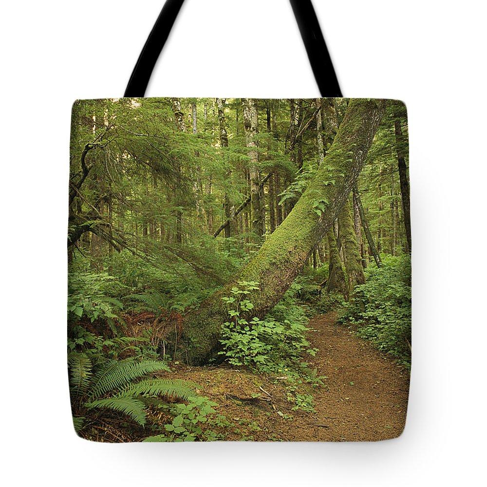 North America Tote Bag featuring the photograph A Trail Cuts Through Ferns And Shrubs by James A. Sugar
