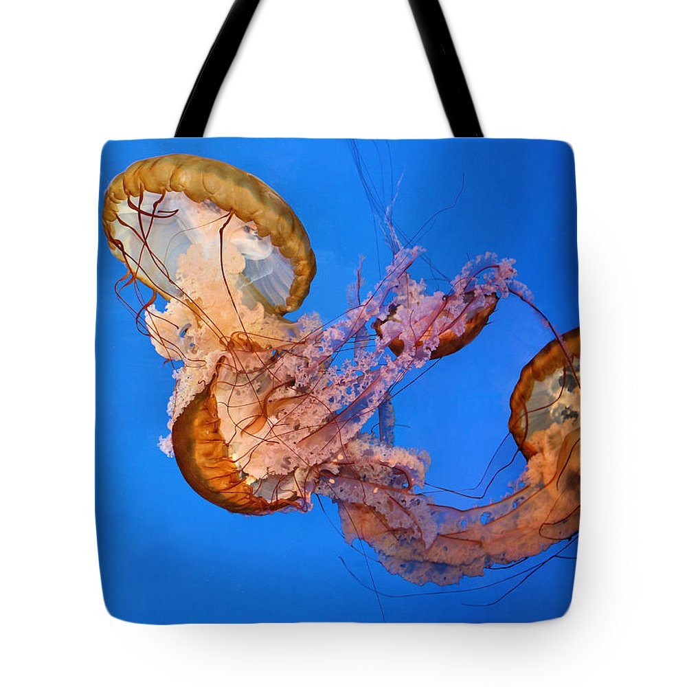 Jellyfish Tote Bag featuring the photograph A Trio Of Jellyfish by Kristin Elmquist