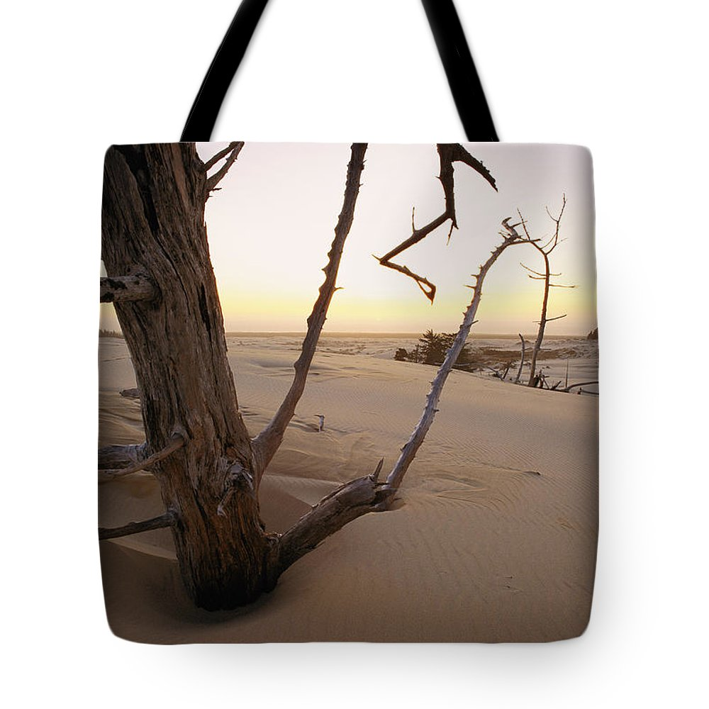 Oregon Dunes National Recreation Area Tote Bag featuring the photograph A Twilight View Of Drift Wood by Phil Schermeister