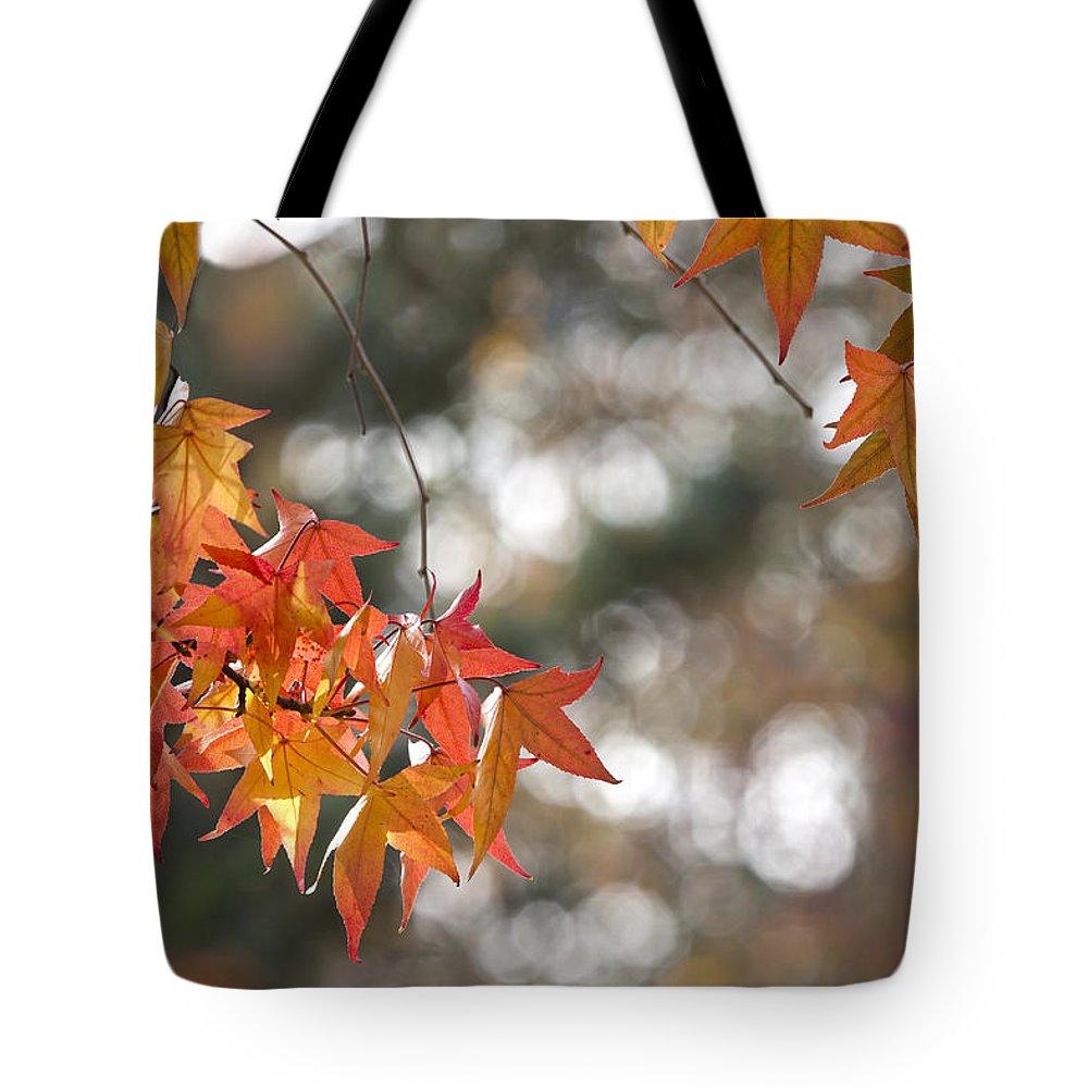 Autumn Tote Bag featuring the photograph A U T U M N . C O L O R S by Thomas Herzog