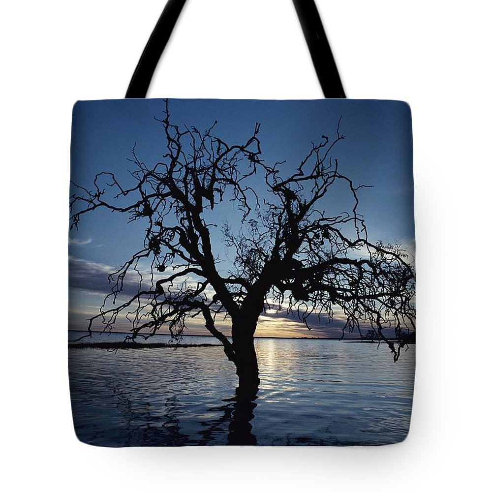 Scenes And Views Tote Bag featuring the photograph A View At Dawn Of A Silhouetted Tree by Jason Edwards