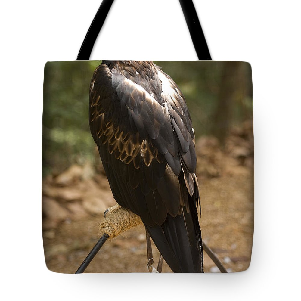 Saint Louis Tote Bag featuring the photograph A Wedge-tailed Eagle At A Wild Bird by Joel Sartore