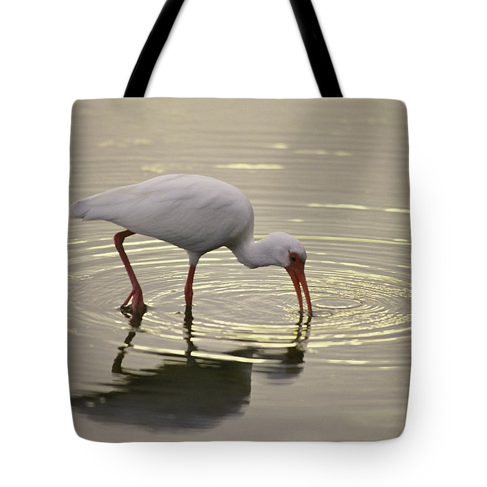 North America Tote Bag featuring the photograph A White Ibis Probes The Mud by Nicole Duplaix