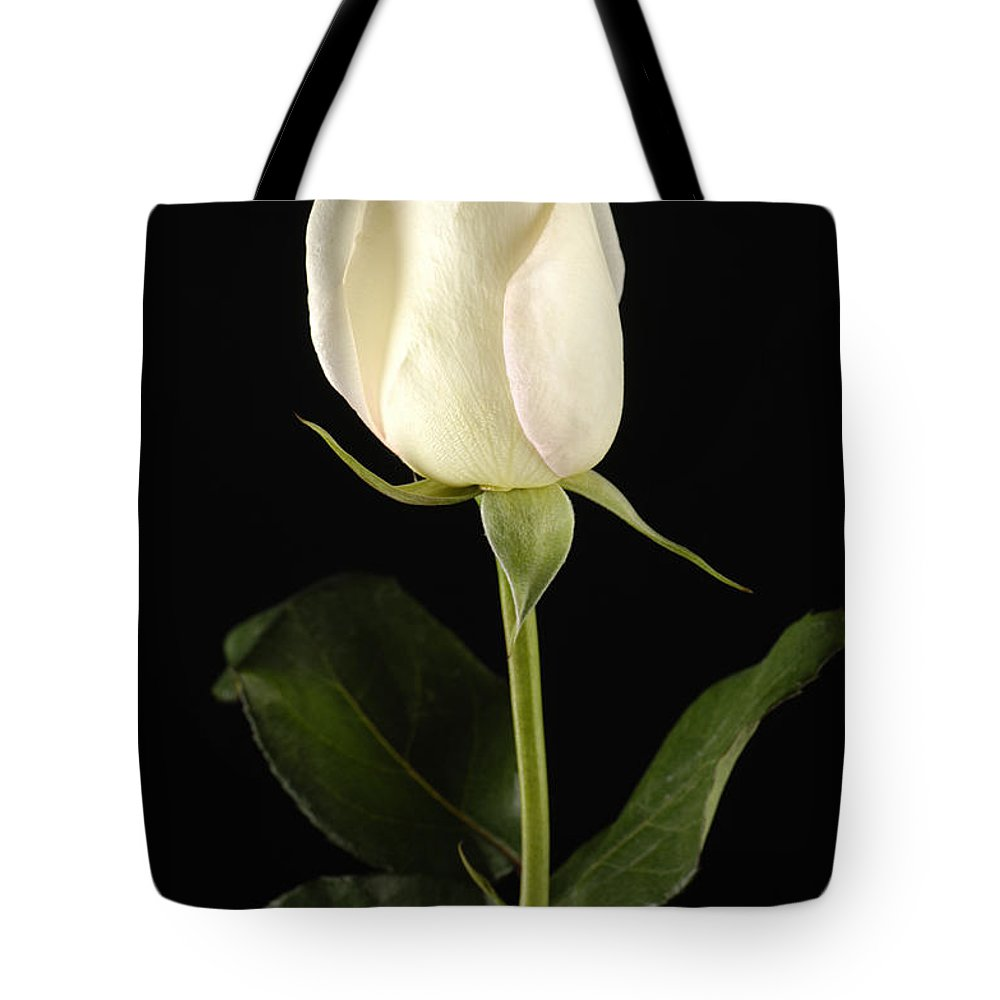 Photography Tote Bag featuring the photograph A White Rose Rosaceae by Joel Sartore