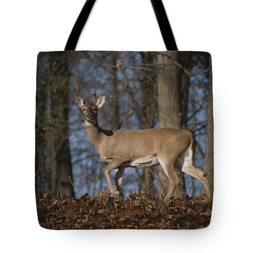 Animals Tote Bag featuring the photograph A Wild Deer Caught In Early Morning by Stephen St. John