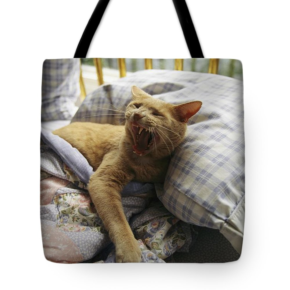 Animal Behavior Tote Bag featuring the photograph A Yawning Cat Wakes From A Nap by Sisse Brimberg