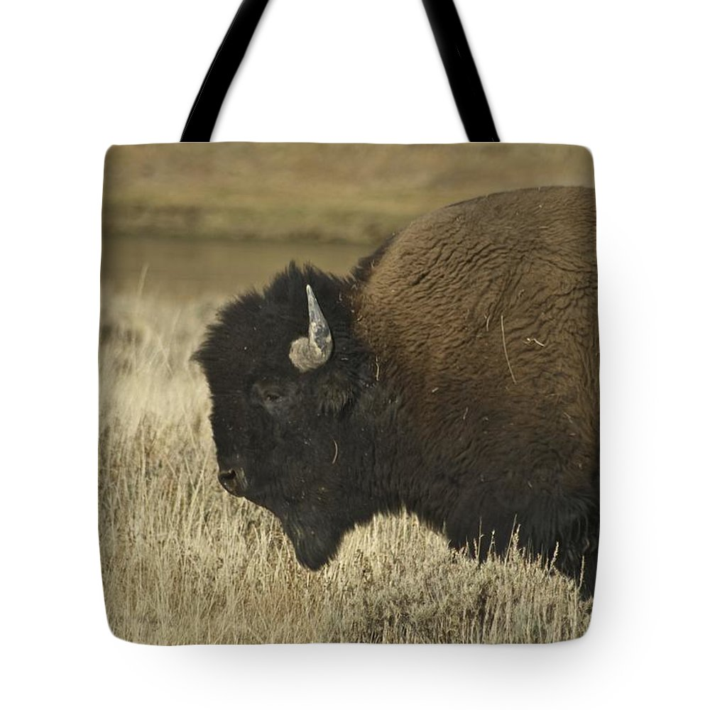 Bison Tote Bag featuring the photograph A Yellowstone Bison 9615 by Michael Peychich