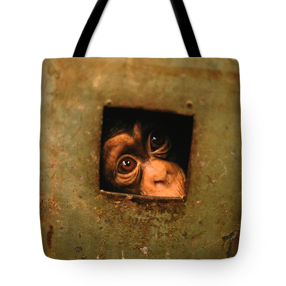 Africa Tote Bag featuring the photograph A Young Chimpanzee Held Captive by Michael Nichols